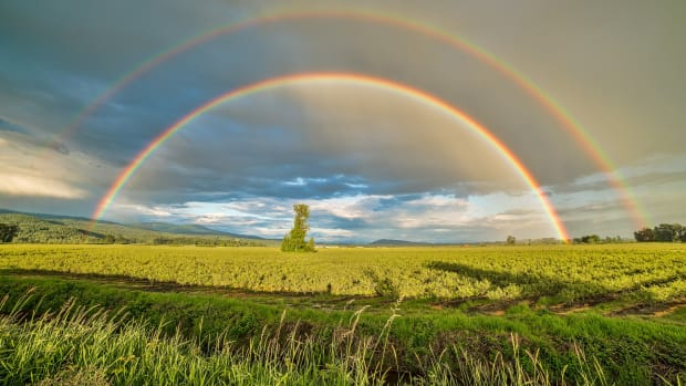 a-legacy-of-a-rainbow-poet-poem-a-humble-offering-to-john-hansen