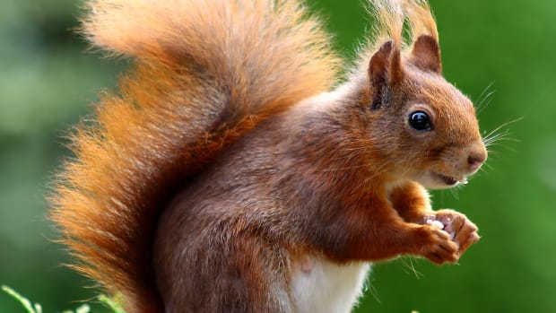 best-squirrel-names