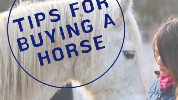 shopping-for-a-horse