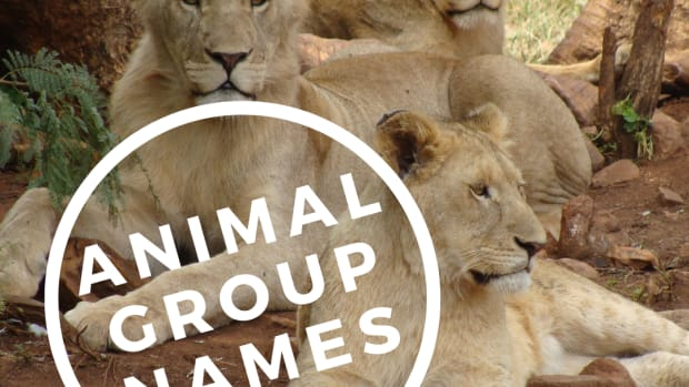 names-for-groups-of-animals