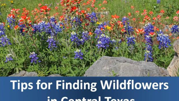 tips-for-taking-bluebonnet-wildflower-drives-near-san-antonio-and-austin-texas