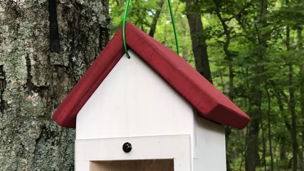 diy-spy-nest-box-how-to-make-a-hanging-window-birdhouse-for-viewing-nesting-birds