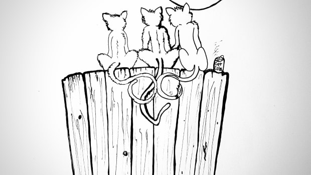three-little-kittens-sitting-on-a-fence