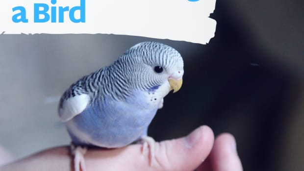 7-things-you-should-know-before-buying-a-pet-bird