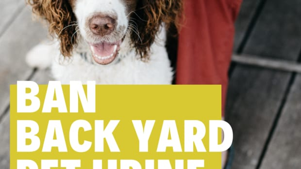 how-to-get-rid-of-dog-pee-smell-in-the-backyard-naturally