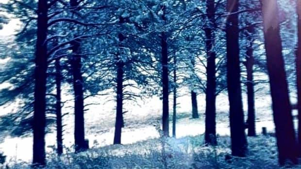 a-winters-dream
