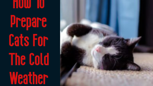 cats-and-the-cold-weather