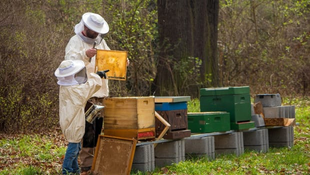 what-are-the-benefits-of-beekeeping