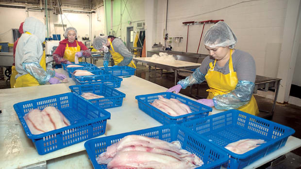 top-alaska-seafood-processing-companies-hiring-for-summer