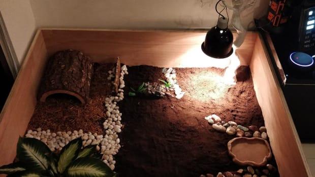 tortoise-homes