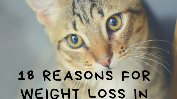 why-is-my-cat-losing-weight-what-should-i-do