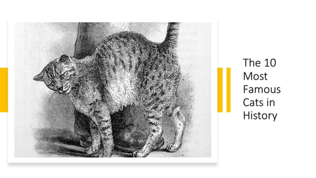 10-of-the-most-famous-cats-in-history