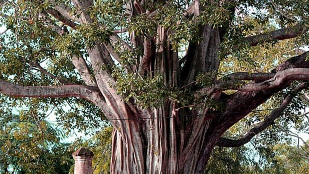 tree-of-knowledge-haiku