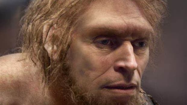 life-of-the-long-ago-man-a-look-into-an-ancestor-of-humanity