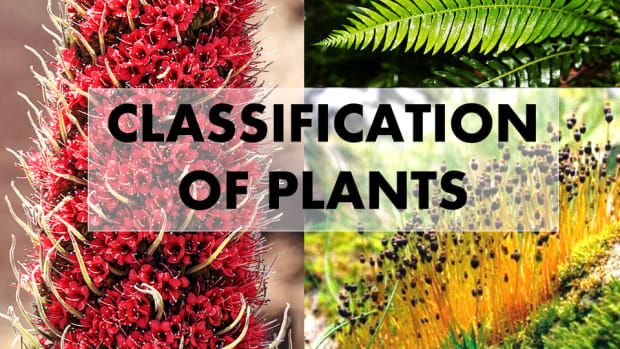 4-classification-of-plants-kingdom-plantae