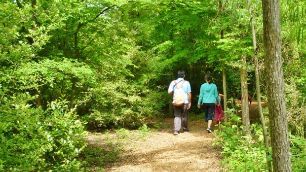 houston-arboretum-and-nature-center