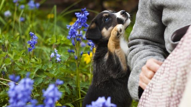 10-worst-dog-names