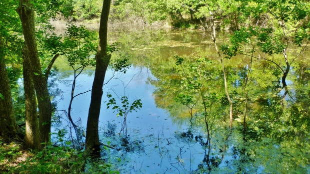 little-cypress-creek-preserve-wildlife-habitat-in-cypress-tx