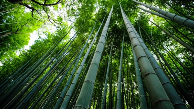 bamboo-fiber-the-manufacturing-process-and-how-to-care-for-bamboo-fabrics