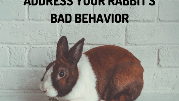 bunny-care-guide-how-to-discipline-your-rabbit