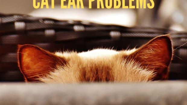 cat-ear-problems