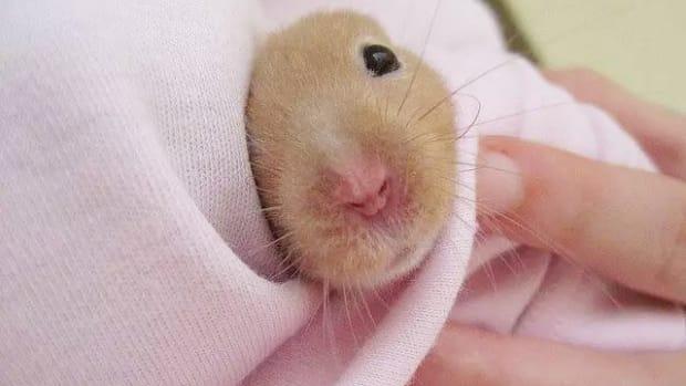 hamster-health