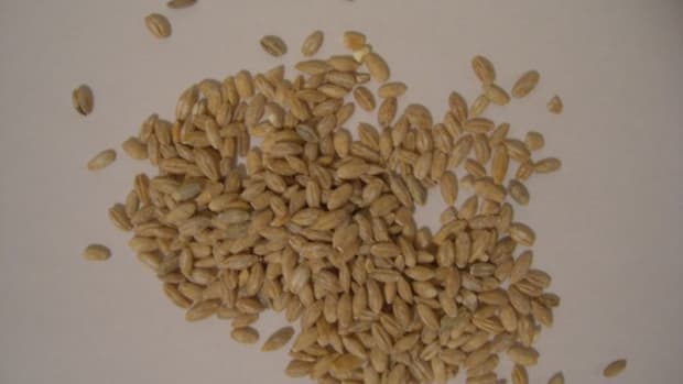 the-nutritional-and-health-benefits-of-barley