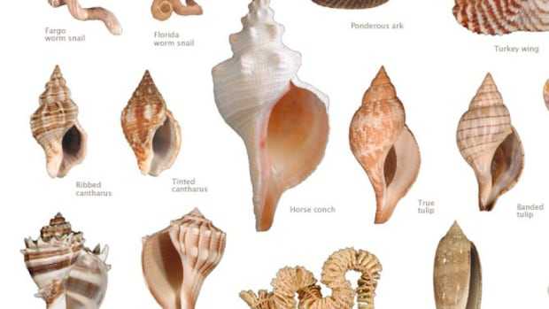 collecting-seashells-in-florida