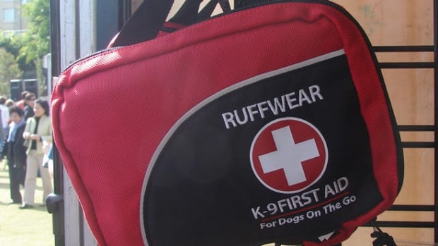 first-aid-kit-dog