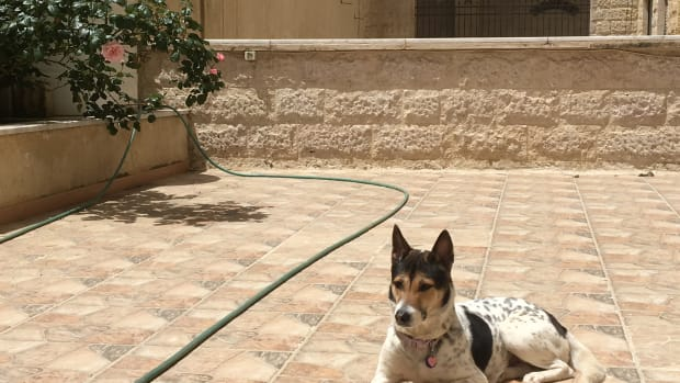 flying-with-a-dog-from-the-uk-to-jordan