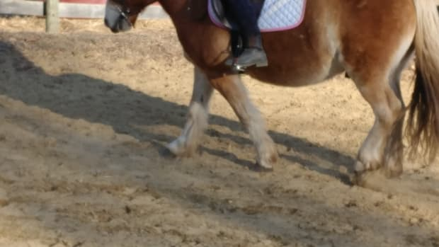 having-a-training-plan-and-keeping-a-training-journal-for-your-horse