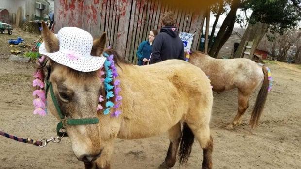 peta-protesting-pony-rides