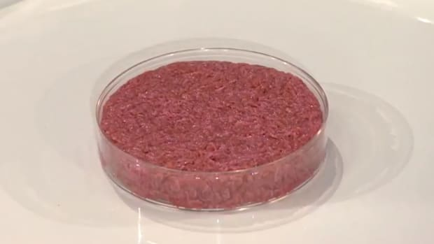what-is-lab-grown-meat-and-is-it-safe