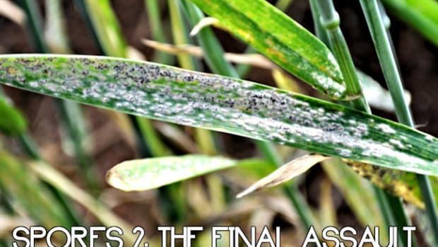 spores-2-the-final-assault