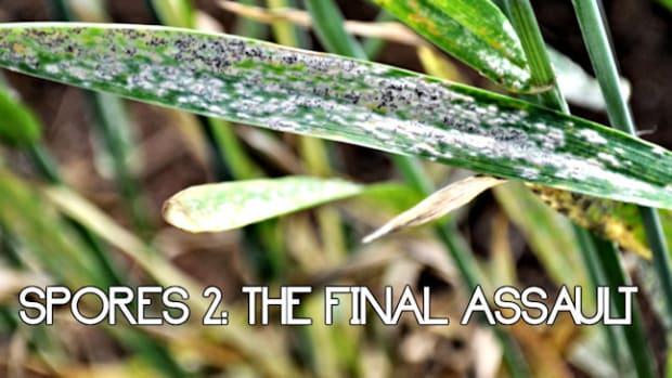 spores-the-final-assault-7