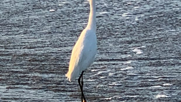 nature-poem-egret-sunrise