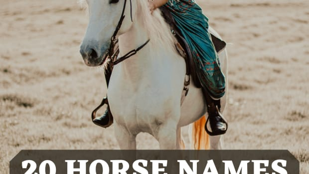 20-names-for-horses-from-greek-mythology