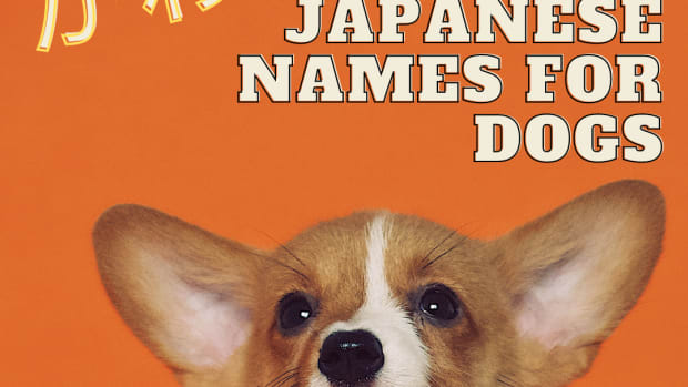 cute-japanese-dog-names