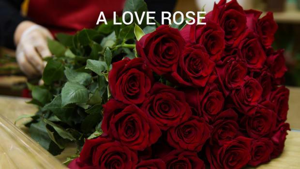 a-love-rose
