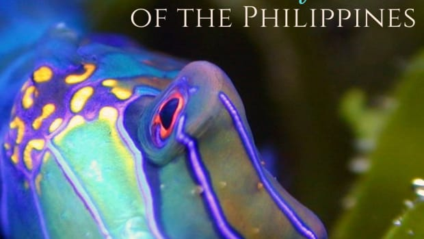 12-most-beautiful-fish-in-the-philippines