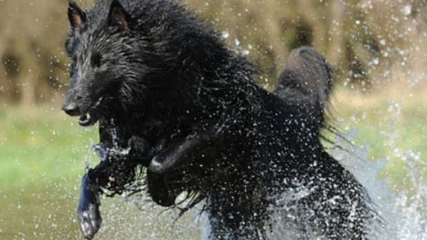 300-badass-dog-names-for-your-pup