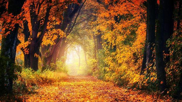 autumn-glory-haiku-collection