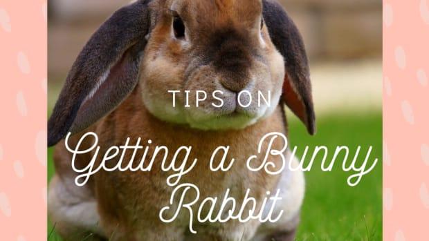 bunny-rabbits-the-perfect-pet