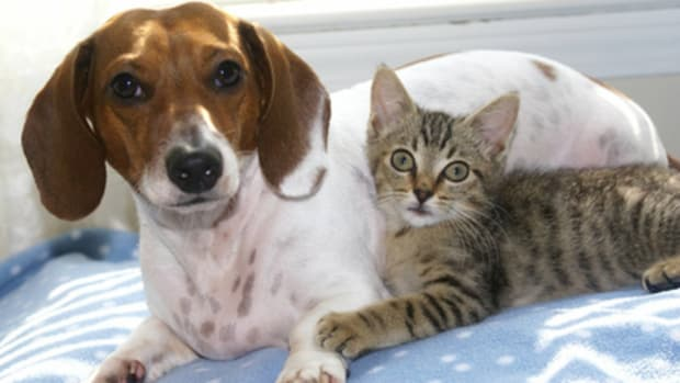 how-to-cure-your-pets-of-tapeworms