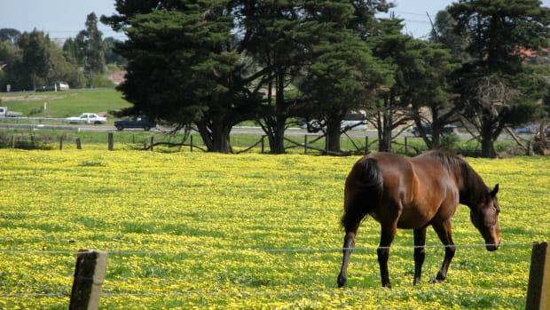 giving-horseback-riding-lessons