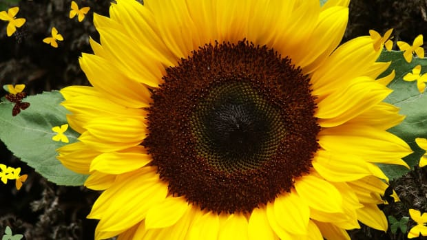 designing-an-original-sunflower-quilt