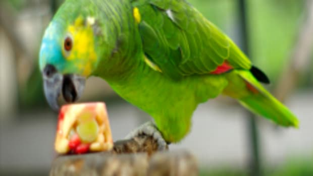 10-tasty-and-healthy-treats-for-pet-birds