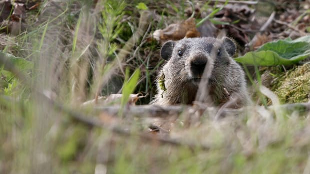 whats-the-point-of-groundhog-day
