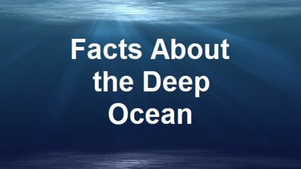 top-10-interesting-and-fun-facts-about-the-ocean-floor