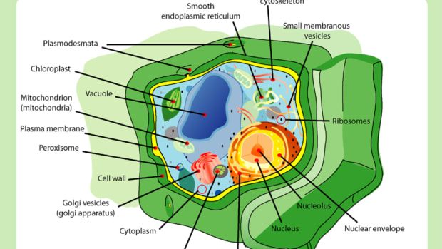 6-parts-of-a-plant-cell-and-their-functions